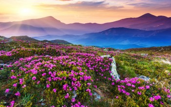 sky,landscape,mountains,sunlight,цветочном поле,sky,Flower field