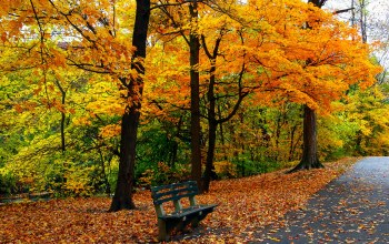 leaves,bench,trees,Road,colors,autumn,park,walk,grass