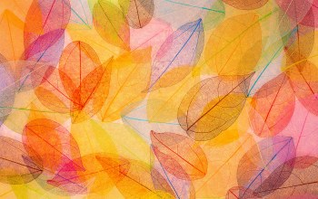 transparent,leaves,autumn,осенние,colorful,Abstract