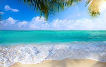 sand,palms,summer,beach,tropical,shore,paradise