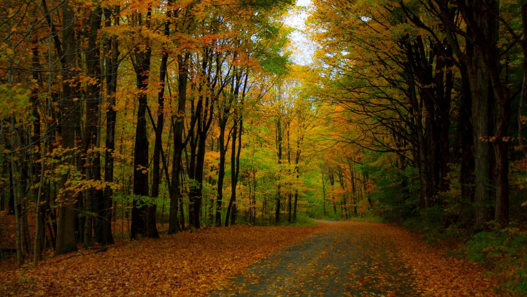 walk,leaves,autumn,forest,fall,colorful,park,Road,trees,colors,path