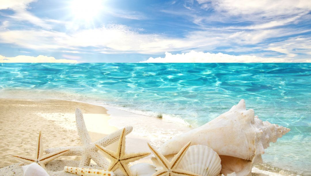 Seashells,ракушки,sand,sunshine,summer,beach,starfishes