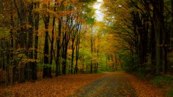 walk,nature,colorful,Road,path,leaves,forest,park,trees,autumn,fall,листья,colors