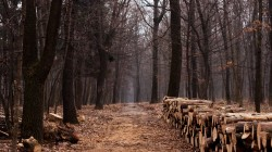 wood,path,Дорога,Лес,trail,lumber,forest,trees