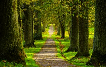 Road,trees,forest,park,spring,walk,path