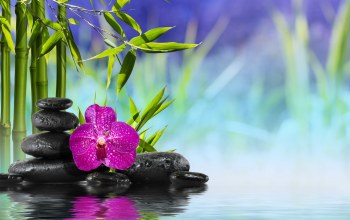 stones,Spa,Orchid,reflection,Bamboo,бамбук,Вода,water,zen,flower