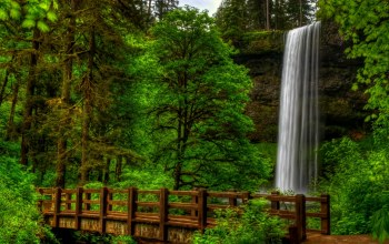 forest,view,scenery,water,bridge,landscape,park,waterfall,trees