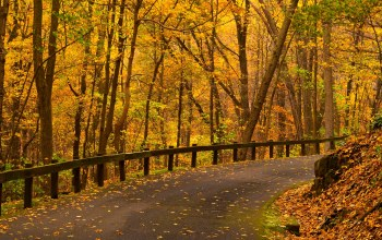 autumn,Road,park,fall,leaves,colors,path,forest,walk,trees,colorful