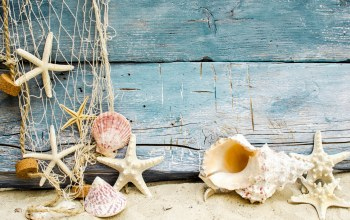 Seashells,starfishes,wood,ракушки,Marine,beach,sand