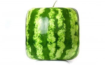 квадратный арбуз,square,watermelon,cube
