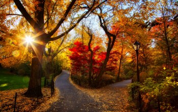 forest,leaves,trees,path,Road,colors,walk,autumn,colorful,fall,park