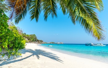 summer,sand,palms,paradise,shore,beach,tropical