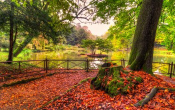 walk,colors,fall,water,forest,river,colorful,autumn,park,leaves,trees