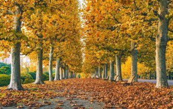 Road,bench,autumn,grass,park,walk,colors,trees,leaves