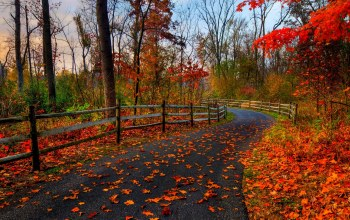 Road,trees,fall,colors,path,forest,leaves,colorful,autumn,park,walk