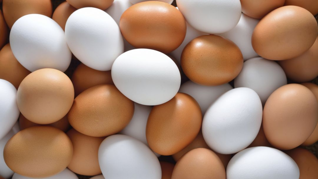 colors,eggs,chicken