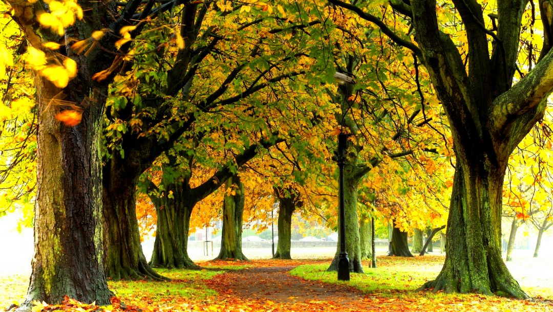 Road,colorful,path,leaves,colors,autumn,forest,trees,walk,fall,park