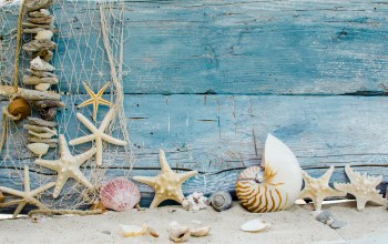 beach,sand,ракушки,Seashells,Marine,wood,starfishes