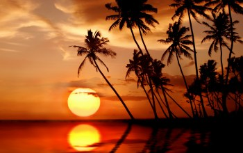 paradise,beach,tropical,тропики,Sunset,palms
