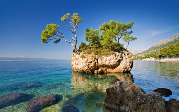 the sea,the rock,the nature,a tree,скала