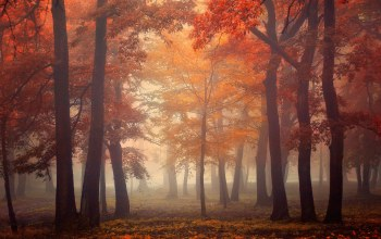 trees,туман,fog,autumn,forest,leaves,light