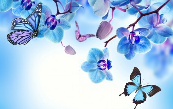 blue,Orchid,butterflies,beautiful,орхидея,цветы