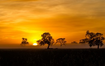 silhouette,mist,fog,sunrise,penola,orange