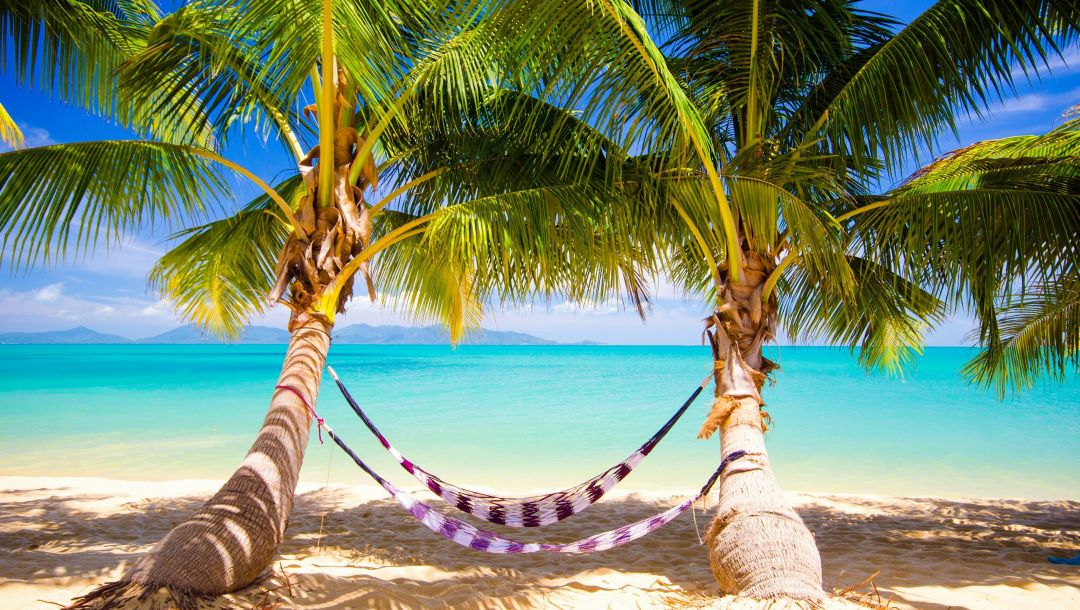 palms,sunshine,vacation,summer,beach,tropical,ocean,hammock,paradise