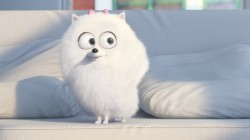 drawing,The secret life of pets,Animal,graphic animation,gigi,cartoon,pet,official wallpaper