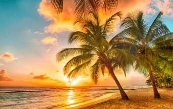 Sunset,ocean,tropical,beach,palms,paradise