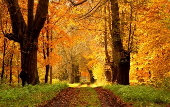 Road,path,leaves,colors,autumn,forest,trees,park,walk,colorful,fall
