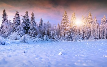 landscape,ёлки,snow,winter