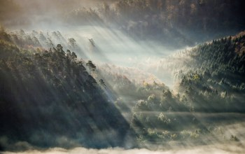 trees,fog,forest,sunlight