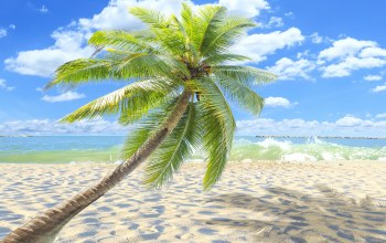 sand,beach,summer,palms,paradise,shore,tropical
