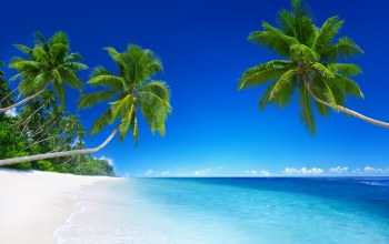 palm,emerald,sand,blue,beach,paradise,ocean,tropical,vacation,summer,coast