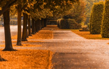 Road,fall,walk,colors,colorful,autumn,forest,park,path,leaves,trees