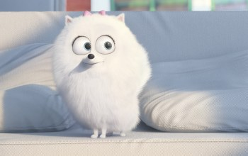 drawing,The secret life of pets,Animal,graphic animation,gigi,cartoon,official wallpaper