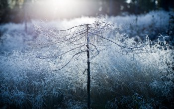 mist,morning,disforestation,frost,beauty