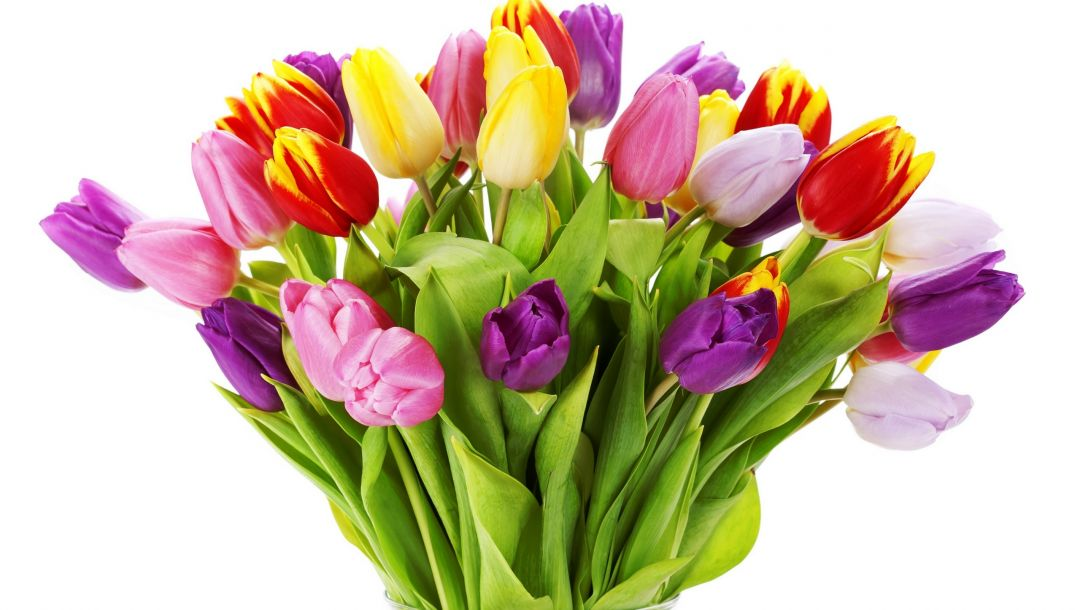 petals,yellow,Red,tulips,White,violet,Bouquet,varicoloured,vase,bright