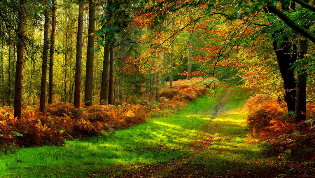trees,leaves,colorful,path,autumn,walk,Road,colors,park,forest,fall