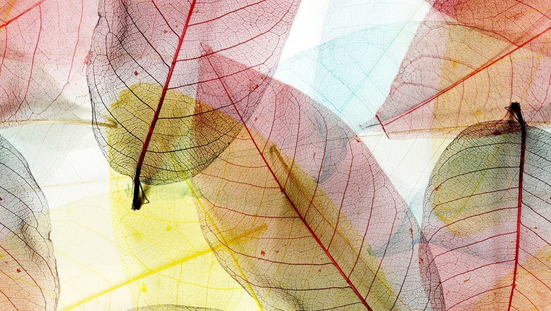 leaves,transparent,Abstract,autumn