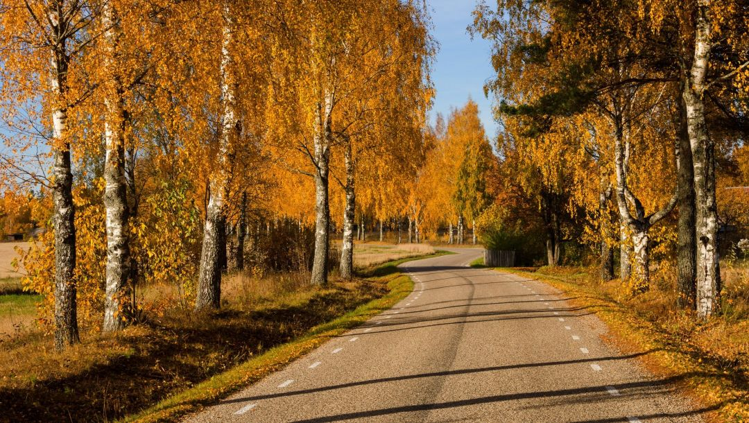 leaves,colorful,path,forest,park,fall,colors,autumn,Road,walk,trees