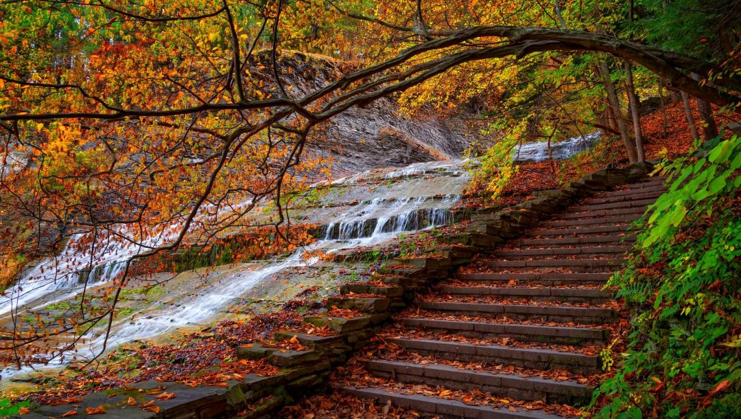 water,park,trees,steps,leaves,colors,colorful,fall,forest,walk,autumn
