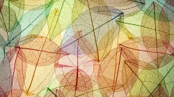 Abstract,colorful,autumn,transparent,leaves,осенние