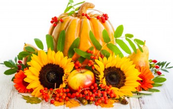 груши,autumn,pumpkin,яблоки,фрукты,harvest,sunflower,тыква