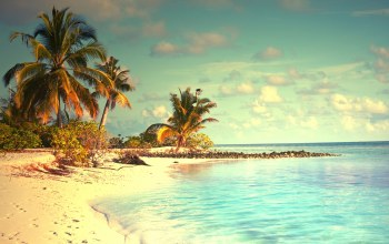 summer,paradise,palms,ocean,tropical,sunshine,beach,vacation