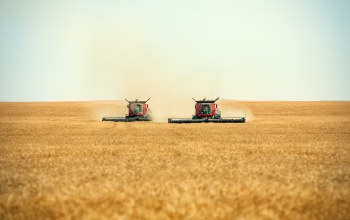 cutting,Комбайны,a pair of combines,workers,Combines,swath