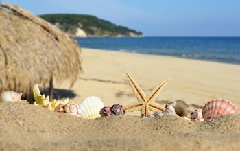 Seashells,summer,blue,sand,shore,beach,paradise,starfish