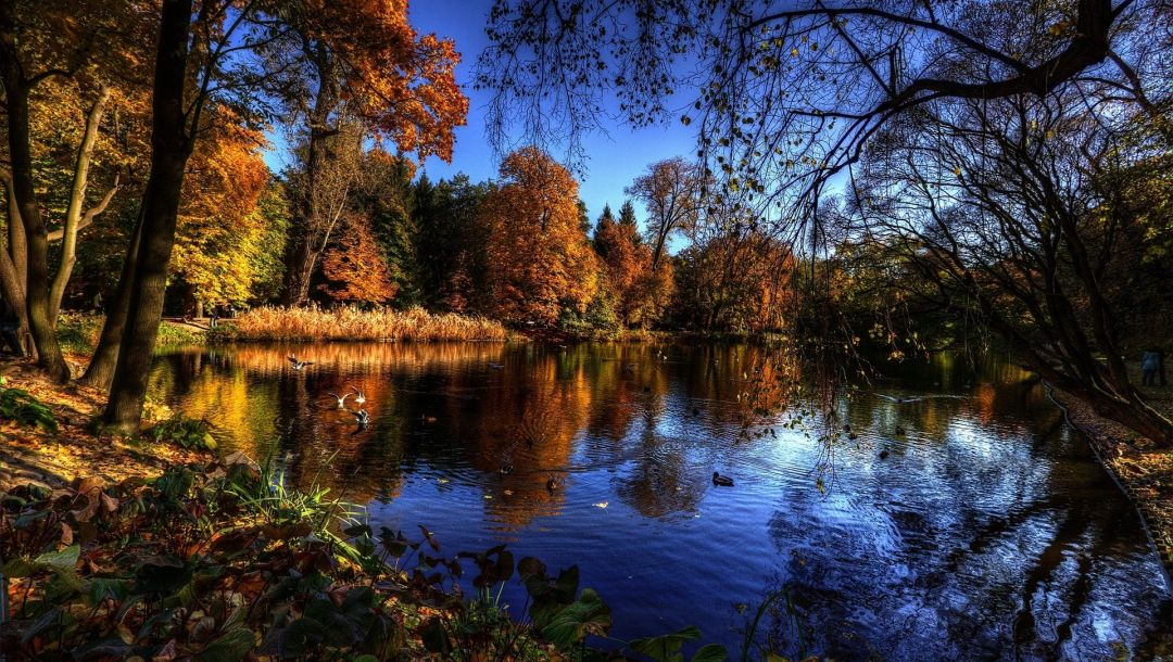 water,trees,branches,autumn,Birds