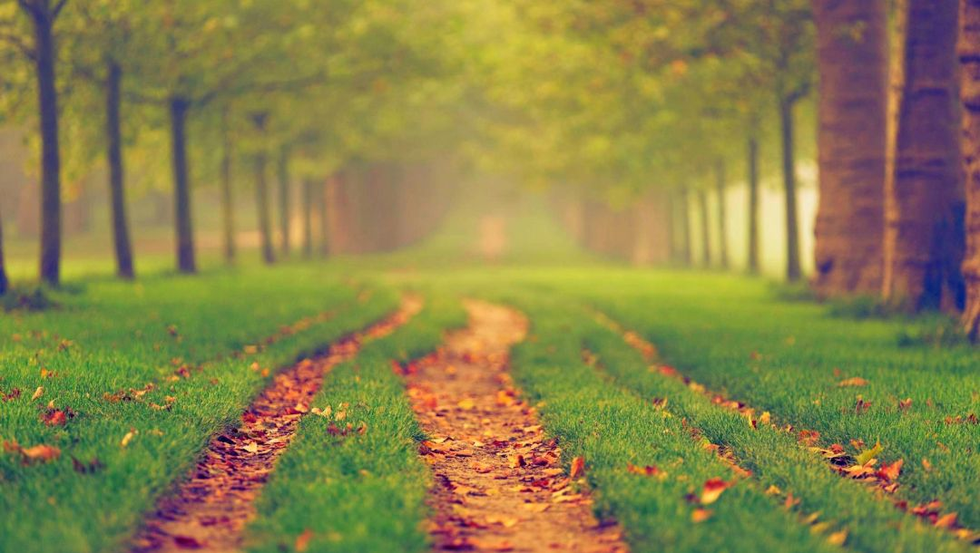 trees,park,path,fall,leaves,autumn,colors,walk,colorful,Road,forest